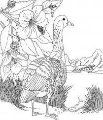 Barbie of Swan Lake Coloring Page 4