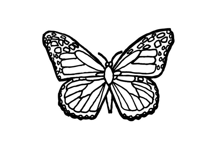 Butterfly Coloring Page 9