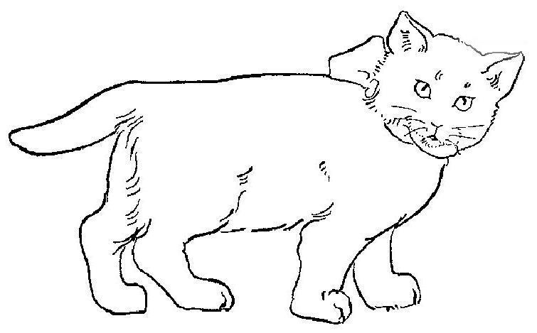Cat Coloring Page 9