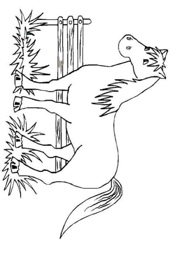 Horse Coloring Page 1