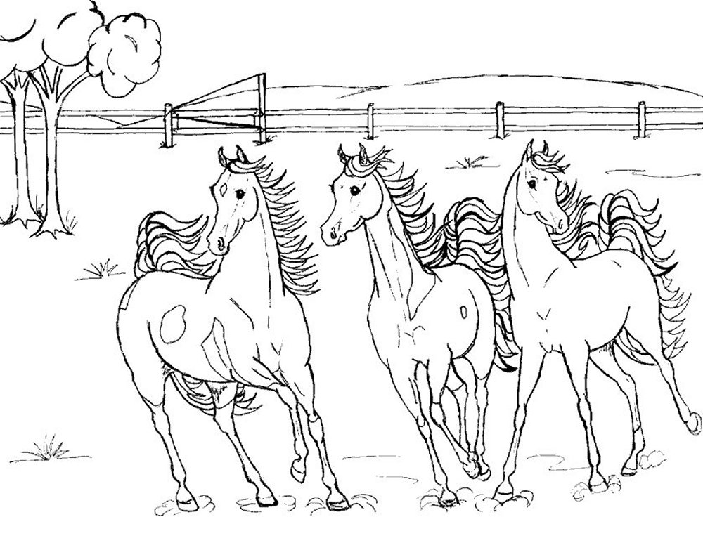 Horse Coloring Page 5